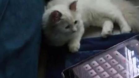 猫语翻译器, 这个发明有点6, 猫咪听懂了吗