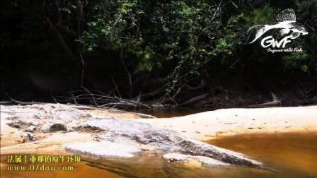 7天造景 法属圭亚那的天然栖息地