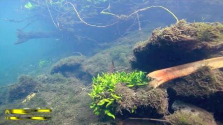 7天造景 西巴布亚原生环境