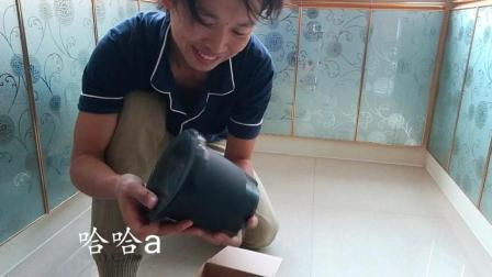 网购豆芽罐(开箱视频), 在家浇浇水就能吃到自己发的豆芽了