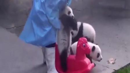有一种作死叫熊猫宝宝要骑木马, 笑得肚子疼, 真心疼他摔成这样