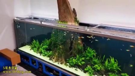 7天造景 5米水草缸
