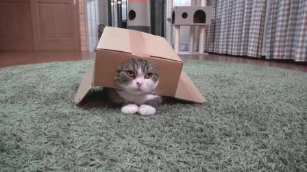 喵星人自己把自己套到了箱子里