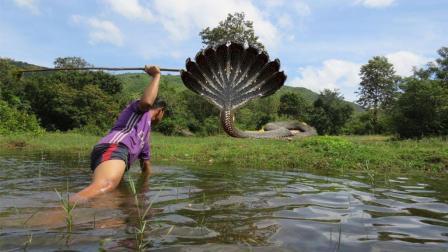 农村小伙河边拉网捕鱼竟遇上了这货!