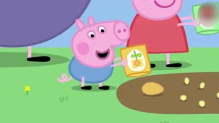 动画: 猪爷爷让佩奇种的花种子 小鸟飞来吃 结果猪爸爸当稻草人都吓跑了