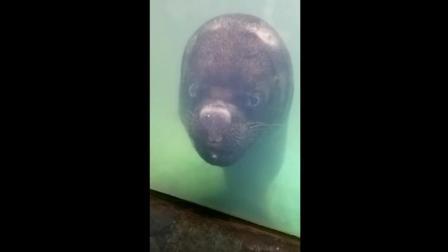 海洋馆你们是不是请到假动物!