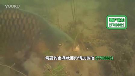 钓鲫鱼调标视频路亚钓获超大鲤鱼 1钓大罗非用什么打窝