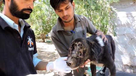 可怜的狗狗脸已经烂没了, 救助站的人也能把它救活