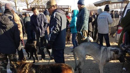 实拍农村狗市, 刘哥相中一条狗两千一已经卖了, 大家看看值不值?
