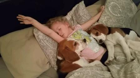 爱睡懒觉的狗狗, 看见小主人在赖床, 狗狗们干脆跟小主人一起赖床了