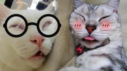 萌宠Show: 喂喂喂注意一点小主的形象好不好 当瞌睡虫遇上喵行人#冬日吸猫#