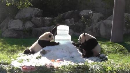 """D1资讯 第一季 双胞胎熊猫姐妹花3岁生日 为抢蛋糕""""大打出手"""""""