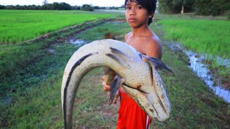 最原始的捕鱼方式, 农村男孩拿着木棍去捕鱼, 遇见大鱼后悲剧了