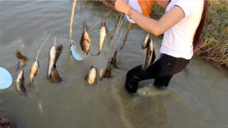 农村美女祖上失传多年的自动钓鱼绝技, 5个钟钓这么多鱼, 绝了