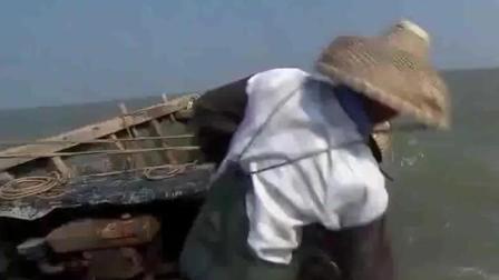渔民拖网捕鱼, 300米大网, 一网上来各种海鲜, 看得直流口水