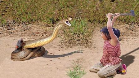 农村小女孩捕蛇真牛, 野外抓了条巨蟒, 又挖到2条大蛇, 厉害了