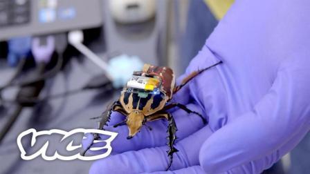 半机械生命: 用游戏手柄遥控活甲虫 | VICE 科技