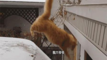 #冬日吸猫#这只猫的操作如同网红