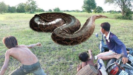 3个农村男孩野外捕鱼, 竟然遇上两条凶猛的大蟒蛇, 他们却这样做!