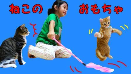猫咪玩具大集合! O酱比猫咪玩的更开心