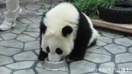 熊猫宝宝喝牛奶的样子好可爱啊