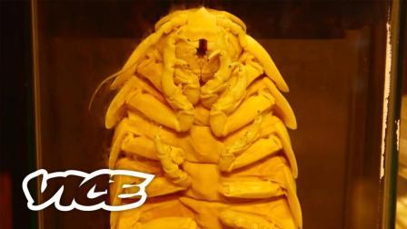 密着24时! : 深海巨虫饲养员 | VICE 肖像