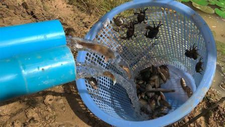 荒废5年的野塘, 农村小伙这样去抓鱼, 3个小时竟抓了这么多