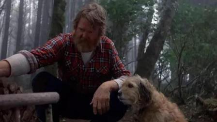超越《忠犬八公》的神作, 2分钟看狗狗的伟大《丛林赤子心》