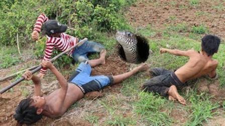 柬埔寨的小学生真牛, 野外这样挖蛇, 也能搞到这大家伙!
