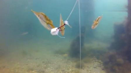 高清实拍钓鱼时水下的情景, 终于知道我为什么钓不到鱼了