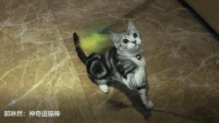 郭琳然: 神奇逗猫棒