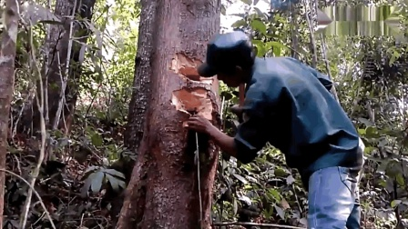 """工人伐木时, 发现树洞里有动静, 砍开后活捉一窝""""小家伙"""""""