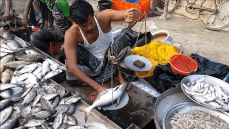 实拍印度人卖鱼, 称鱼的方式能笑死人!