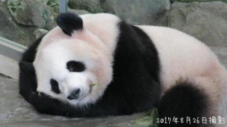 萌萌的熊猫宝宝睡的好香啊