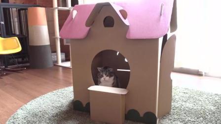 主人给喵星人做了个小房子喵星人很喜欢