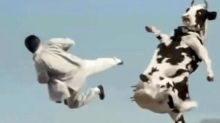 功夫奶牛: 功夫高手大战功夫奶牛, 不笑不行
