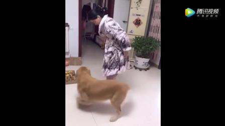 看看女人到底有多麻烦? 就连狗都忍受不了要造反了!