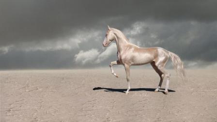 """世界最值钱的马, 被称作""""来自天堂的马"""", 一匹可以买10辆法拉利 !"""