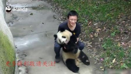 粑粑教熊猫宝宝跳舞