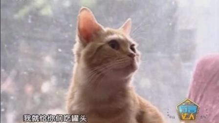"""德阳蛋糕女孩没有被方言""""猫洗脸""""难倒"""