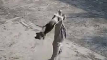 监控:偷狗贼残忍摔狗瞬间