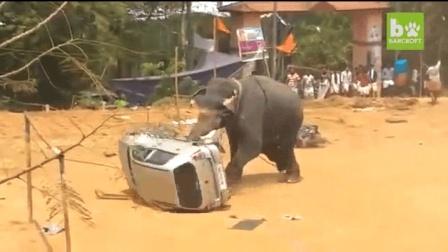 大象疯起来, 分分钟让你知道什么叫绝望