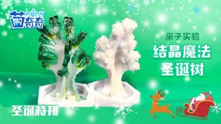 圣诞特刊丨幼儿科学小实验 奇妙的圣诞树
