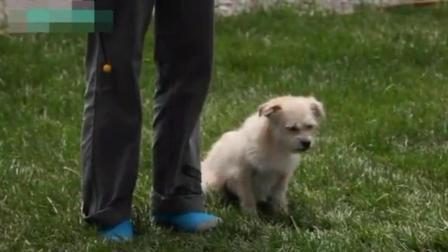 训狗狗的方法全部视频 训犬18种图及手势 小狗怎么训练听话