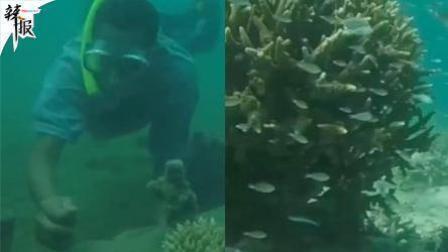 【整点辣报】移植珊瑚礁 肯尼亚全力保护环境