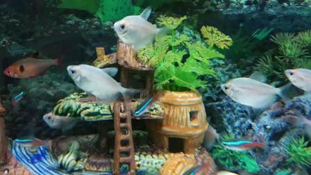 小鱼缸适合养什么鱼