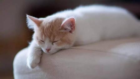 3岁宝宝在家离奇死亡! 监控显示只有一只猫, 得知真相宝妈崩溃