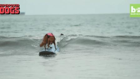 """现实中的""""超人"""", 会冲浪的狗狗瑞奇, 同时也是自闭症儿童的好伴侣"""