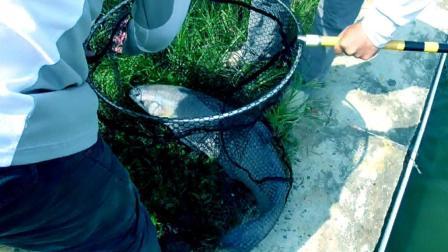 农村男子捕鱼钓鱼姑娘下河抓鱼衣服都弄破了捕鱼视频 陶志