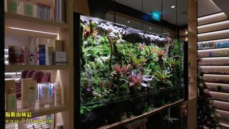 7天造景 美容院雨林缸